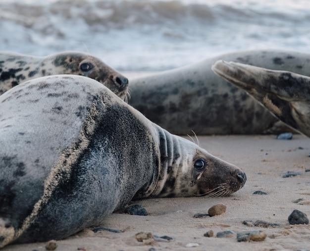Focas deitadas na praia durante o dia