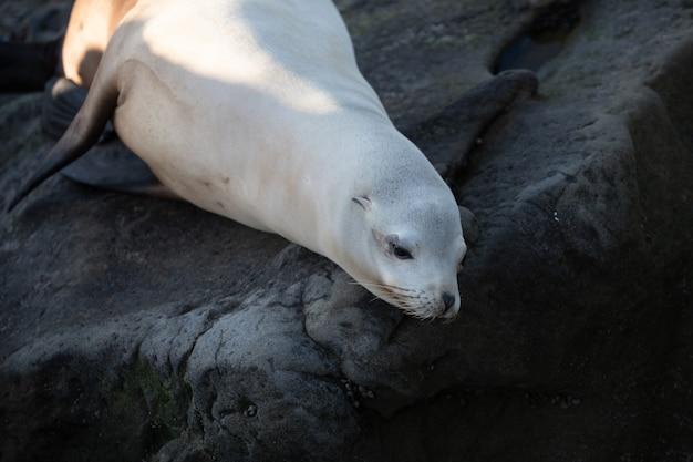 Focas do cabo. conceito de vida selvagem com leão-marinho.