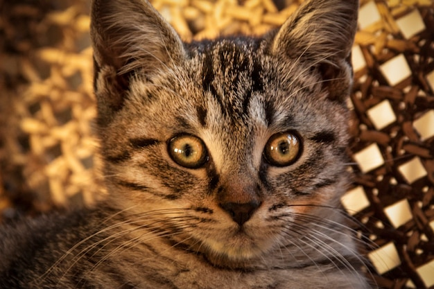 Focinho de filhote de cachorro pequeno gato mestiço