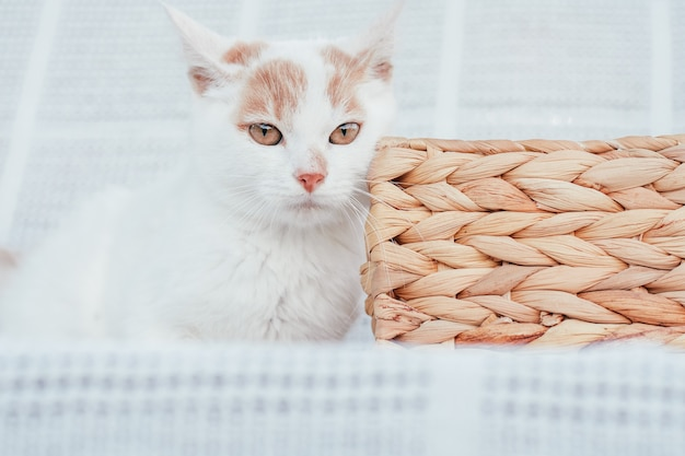 Focinho parcialmente borrado de gato ruivo e branco ao lado de uma cesta de vime em fundo branco, foco seletivo