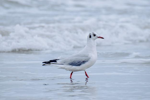 Foco raso de uma gaivota na praia em um dia sombrio
