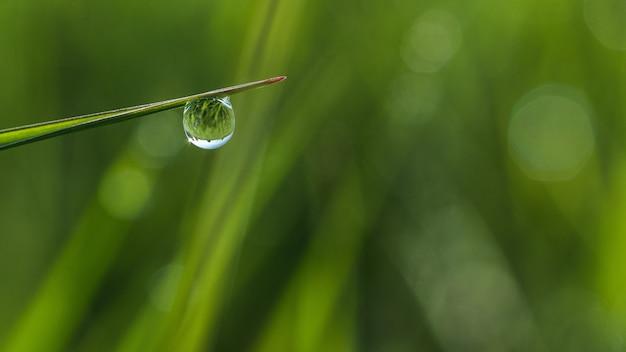 Foco raso em close de uma gota de orvalho na grama com bokeh