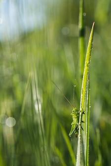 Foco raso vertical close-up de um gafanhoto verde na grama