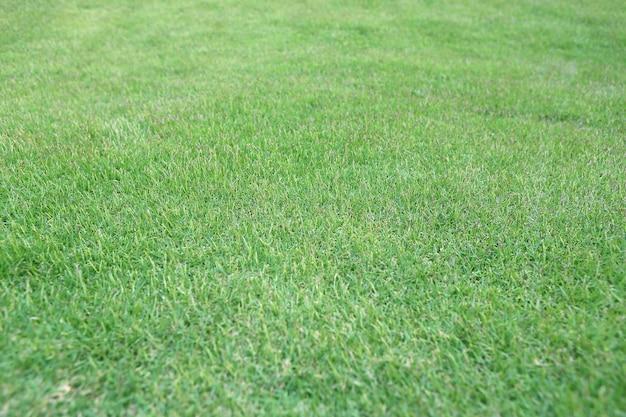 Foco selecionado do fundo da grama verde no centro.