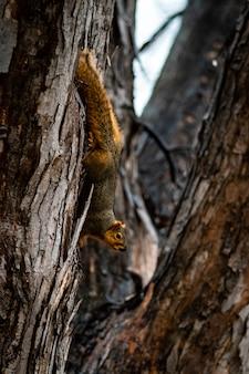 Foco seletivo animal, foco seletivo no assunto, desfoque de fundo, durante o tempo natureza incrível agradável novo maravilhosamente foto