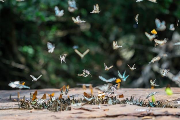 Foco seletivo borboletas no chão e voando na natureza