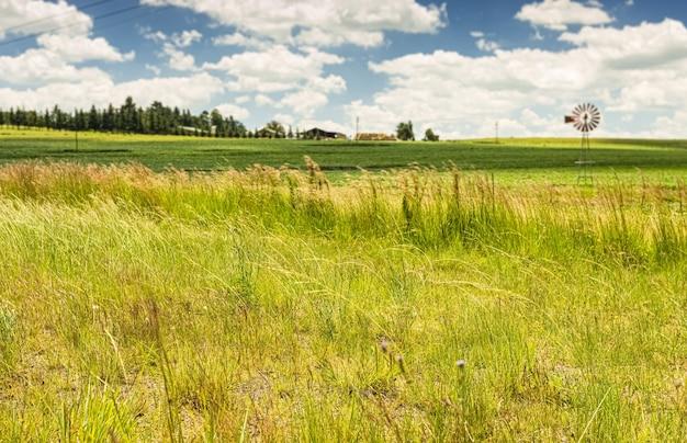 Foco seletivo da grama de um campo