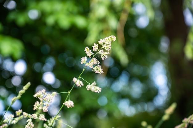 Foco seletivo da grama em um campo sob a luz do sol com um fundo desfocado e luzes bokeh