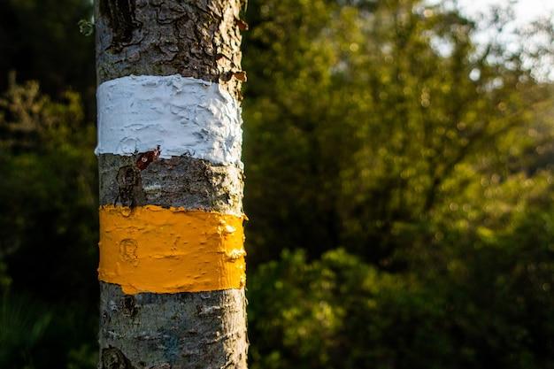 Foco seletivo de detalhes de marcação turística em trilhas para caminhadas