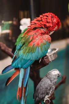 Foco seletivo de dois pássaros