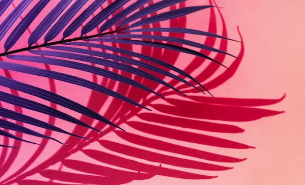 Foco seletivo de folhas tropicais exóticas em gradiente de cor. folhas abstratas e fundo de sombra. para criar o layout do projeto