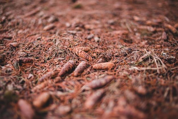 Foco seletivo de grama seca