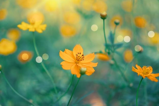 Foco seletivo de lindas flores coloridas