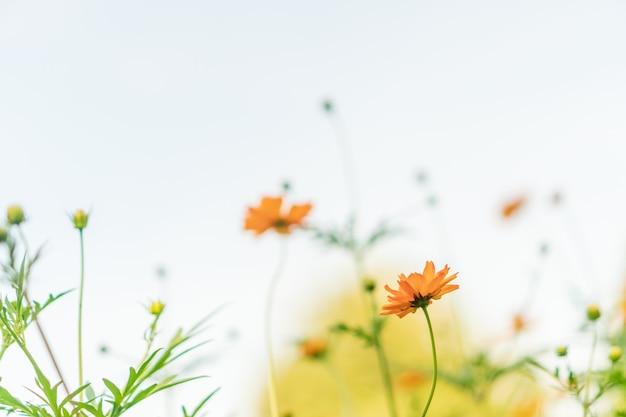 Foco seletivo de lindas flores com fundo branco.