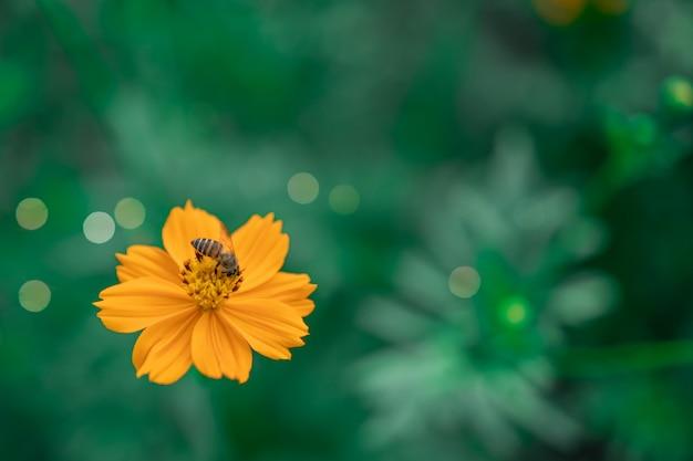 Foco seletivo de lindas flores com fundo de campo.