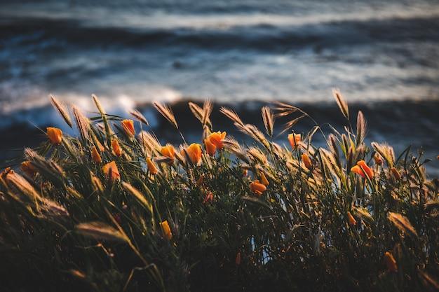 Foco seletivo de um campo com belas flores de laranja perto do corpo d'água