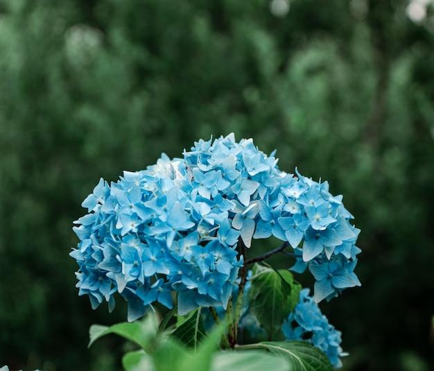 Foco seletivo de um pequeno buquê de pequenas flores azuis