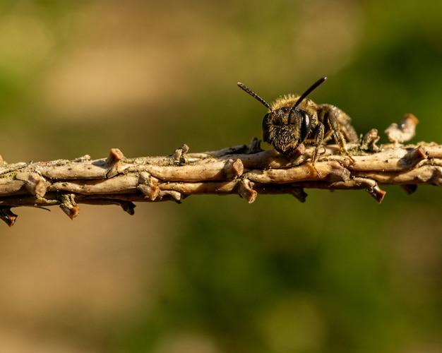 Foco seletivo de uma abelha em um galho de árvore em uma vegetação desfocada