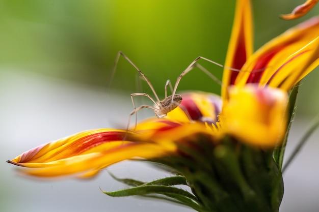 Foco seletivo de uma flor amarela com marcas vermelhas em suas pétalas