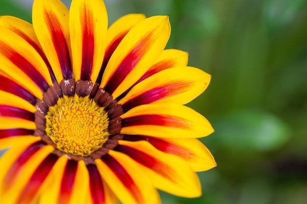 Foco seletivo de uma flor amarela com marcas vermelhas nas folhas