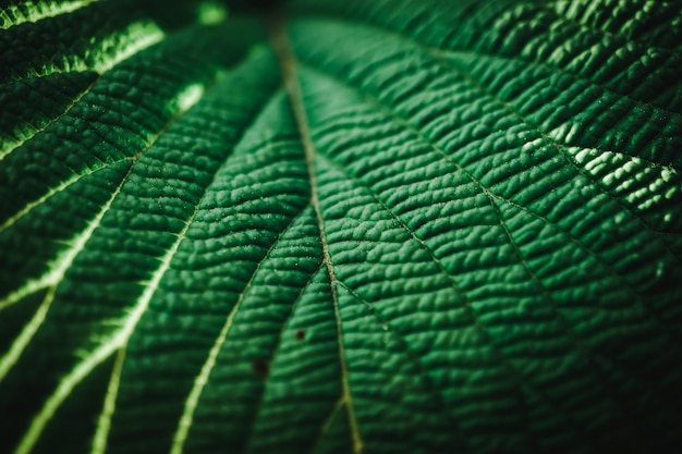 Foco seletivo fechado fundo tropical tom verde folha verde verão
