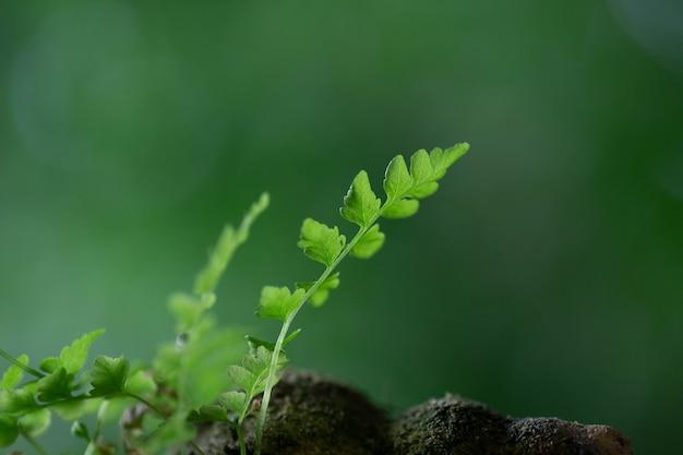 Foco seletivo na rocha com folhagem brilhante de musgo verde e fundo verde natural