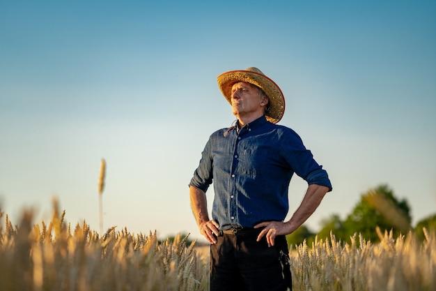 Foco seletivo no homem de pé no campo de trigo de estupro. temporada de colheita. trigo amarelo e céu azul acima.