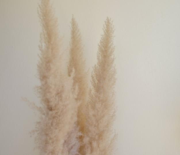 Foco seletivo seco grama de pampas junco haste de pluma decorativa arranjo de flores de penas para casa