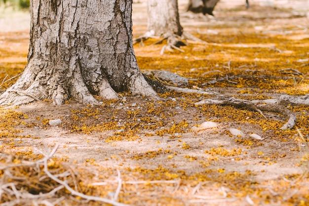 Foco seletivo sistema radicular complexo acima do solo de uma árvore cercada por folhas caídas de outono. as raízes de uma árvore crescem acima do solo, cobertas por folhas de outono.
