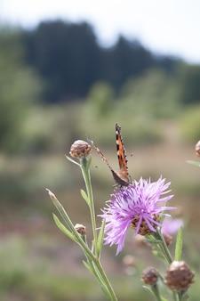 Foco seletivo vertical hsot de uma borboleta laranja em uma flor roxa selvagem