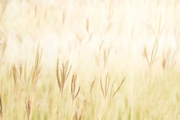 Foco suave campo da grama para fora da paisagem da porta, cor de tom vintage.