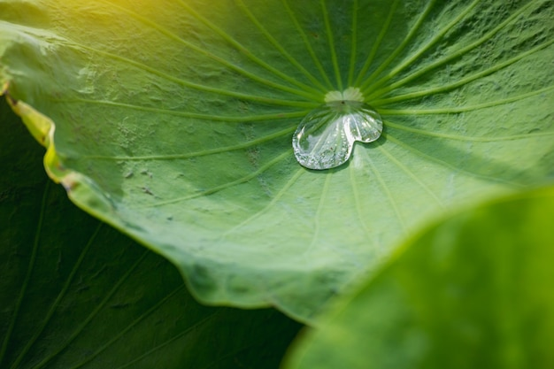 Foco suave close-up do campo de arroz verde amarelo