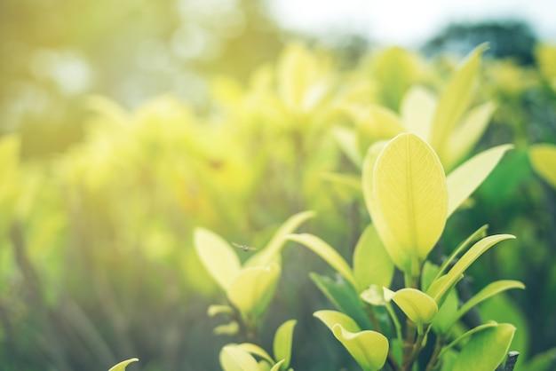 Foco suave de folha verde com closeup em vista da natureza no fundo de vegetação turva