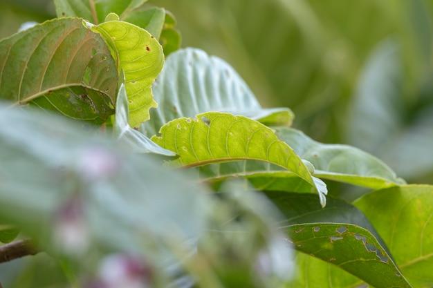 Foco suave de folha verde, fundo verde