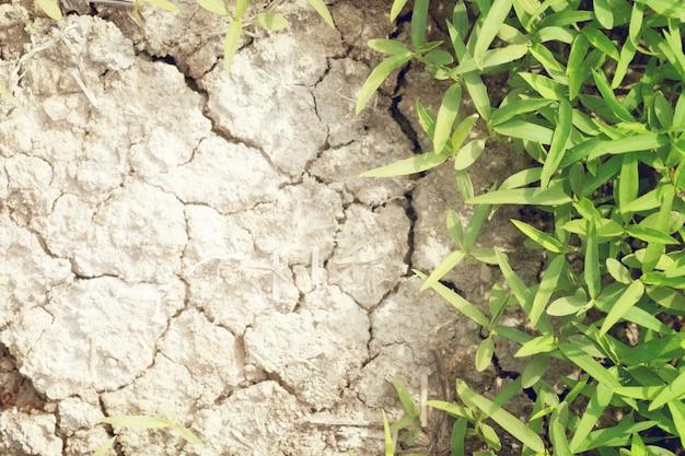 Foco suave de grama verde na lama seca rachada com espaço de cópia de texto e cor vintage suave. efeito global de desparasitação.