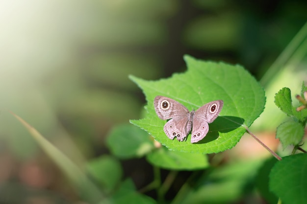 Foco suave e borboleta de borrão sentado na folha verde