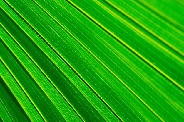 Foco suave e seletivo verde deixa o fundo do papel de parede da natureza da primavera