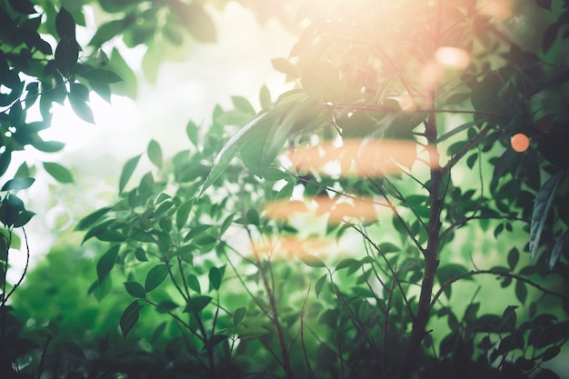 Foco suave folhas verdes frescas e árvores com raio de sol