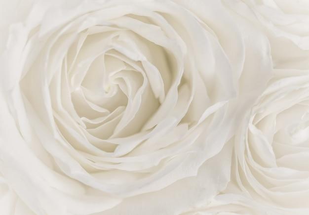 Foco suave fundo floral abstrato flor rosa branca macro flores pano de fundo para marca de feriado