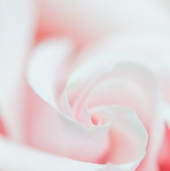 Foco suave fundo floral abstrato rosa flor macro flores pano de fundo para marca de feriado