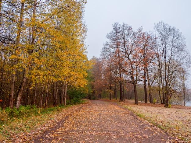 Foco suave. outono folhas caem. um caminho em um parque nublado de outono com folhas caindo. uma estrada secundária através de uma floresta estacional decidual.