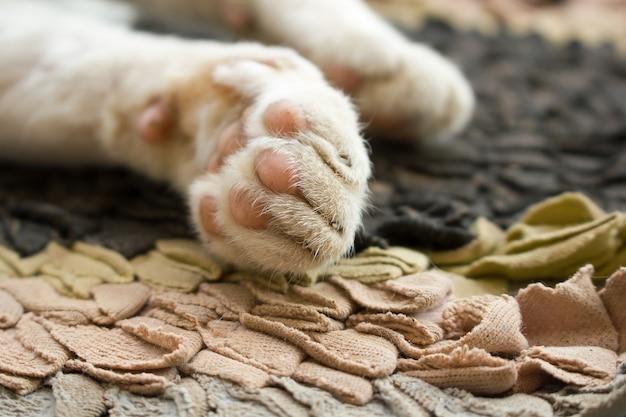 Foco suave pés de gato.