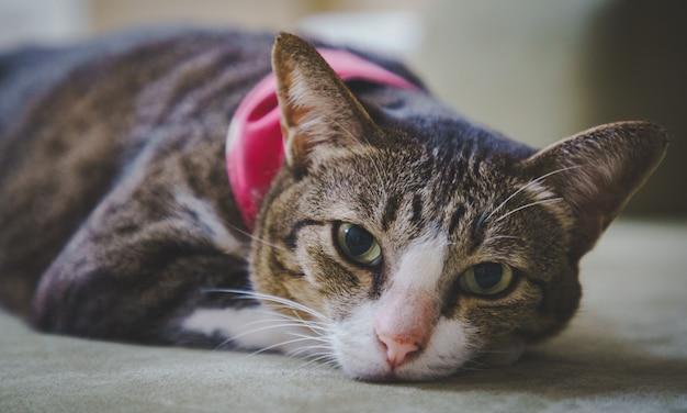 Foco suave um gatinho gato malhado marrom dormindo na cama confortavelmente e não impressionado.