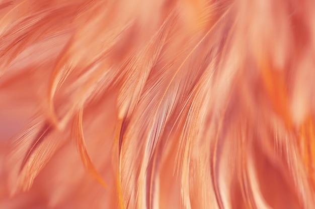 Fofo de penas de galinha no estilo macio e desfoque para o fundo, arte abstrata