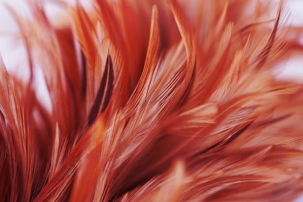 Fofo de penas de galinha no estilo macio e desfoque