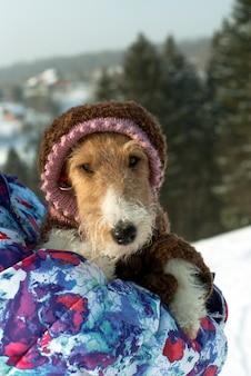 Fofo fox terrier em um engraçado macacão de lã tricotado com um capuz olhando por trás do ombro de sua amante