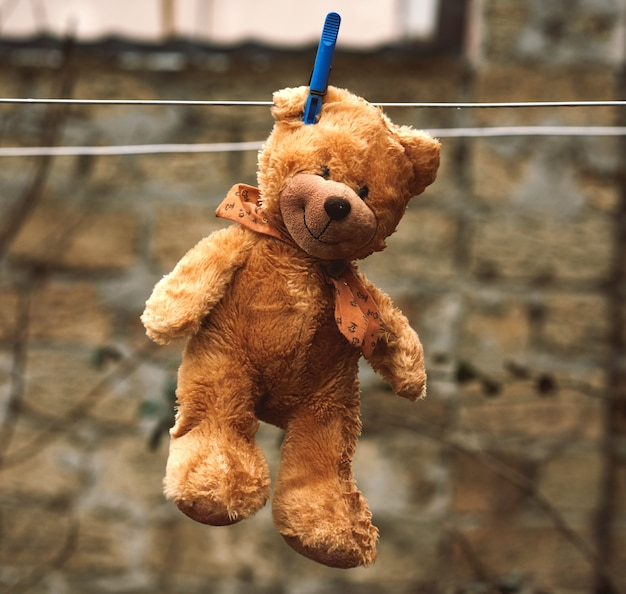 Fofo urso de pelúcia marrom molhado pendurado em um varal e secagem