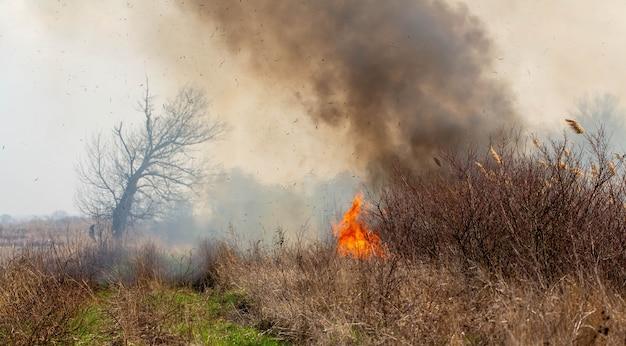 Fogo. a grama está queimando no campo.