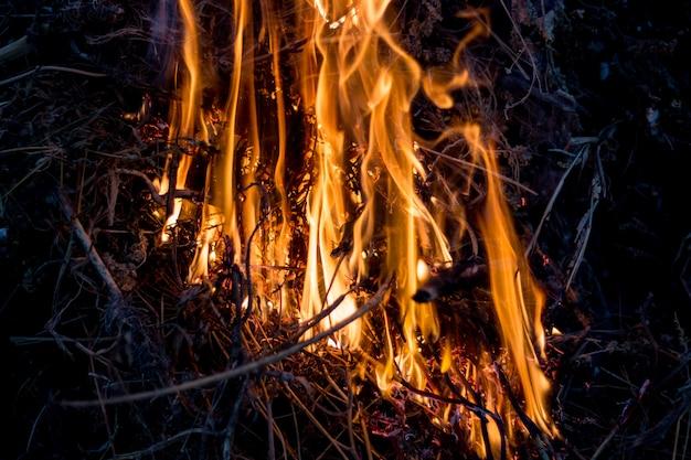 Fogo brilhante na natureza à noite