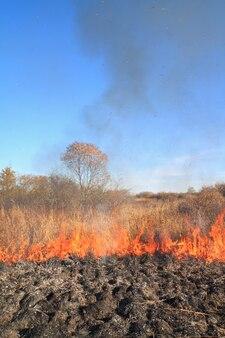 Fogo controlado para remover arbustos secos. redução de risco de queima, tiro pela culatra, swailing ou burn-off